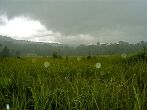 Rainstorm in the elephant grass.