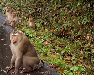 Monkeys on the side of the road!!