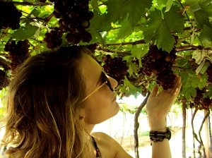 Assessing grapes. Yes, these look ripe and delicious.