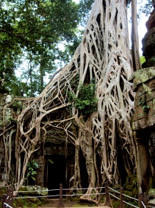 The jungle reclaims Ta Prohm.